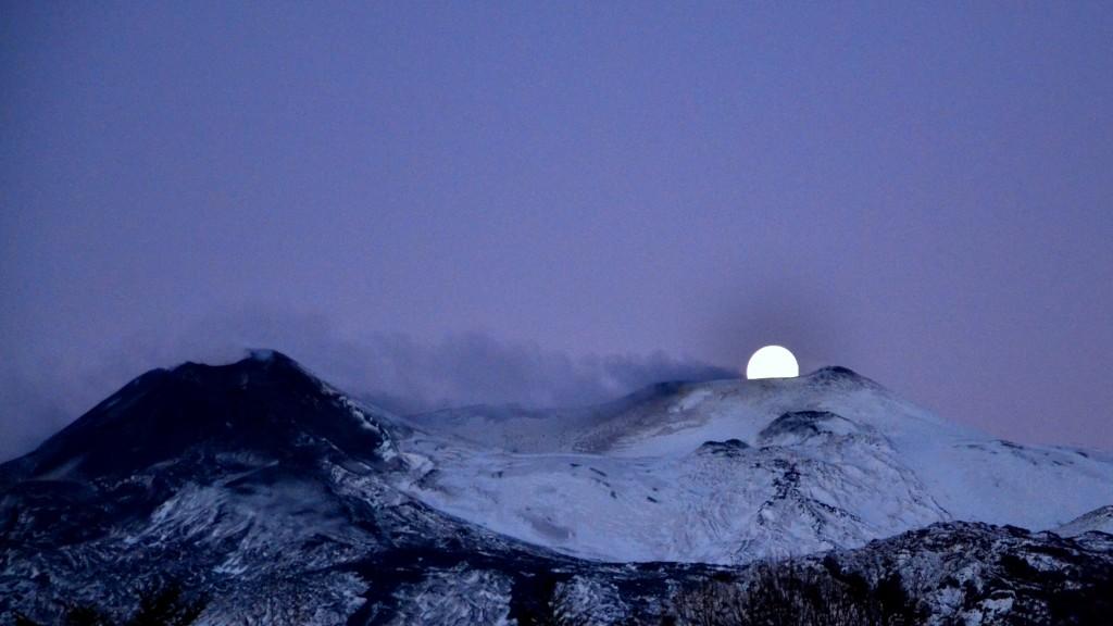 Luna cullata