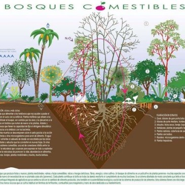 Permacultura. Progettazione e creazione di una Food forest