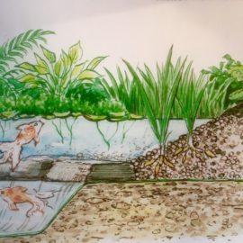Sulle tracce dell'Acqua. Progettare ecosistemi naturali