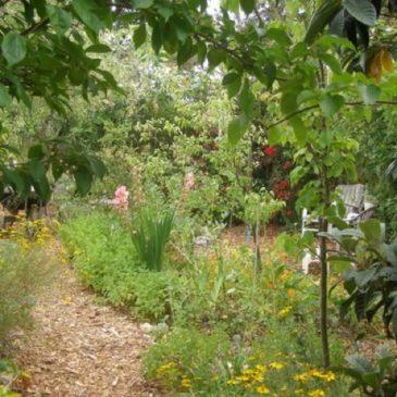 Il frutteto e il giardino naturale – Corso teorico-pratico